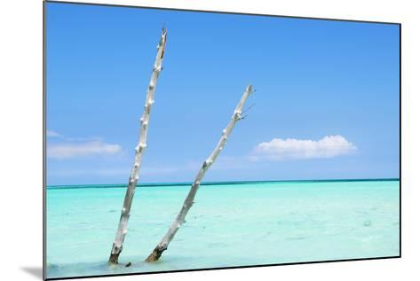 Cuba Fuerte Collection - Aquatic Tree II-Philippe Hugonnard-Mounted Photographic Print