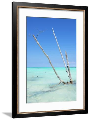 Cuba Fuerte Collection - Aquatic Tree-Philippe Hugonnard-Framed Art Print