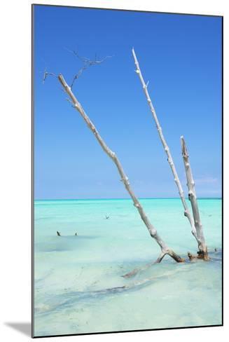 Cuba Fuerte Collection - Aquatic Tree-Philippe Hugonnard-Mounted Photographic Print