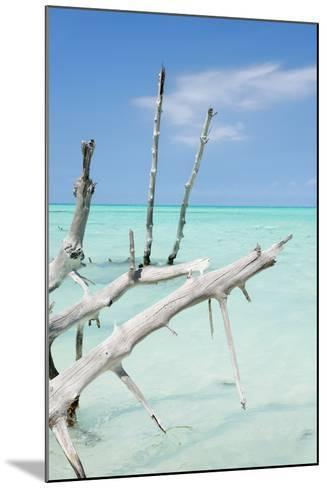 Cuba Fuerte Collection - White Trees-Philippe Hugonnard-Mounted Photographic Print