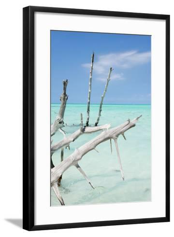 Cuba Fuerte Collection - White Trees-Philippe Hugonnard-Framed Art Print