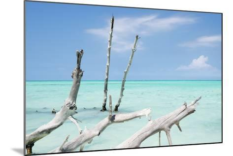 Cuba Fuerte Collection - White Trees II-Philippe Hugonnard-Mounted Photographic Print