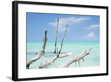 Cuba Fuerte Collection - White Trees II-Philippe Hugonnard-Framed Art Print