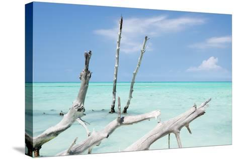 Cuba Fuerte Collection - White Trees II-Philippe Hugonnard-Stretched Canvas Print