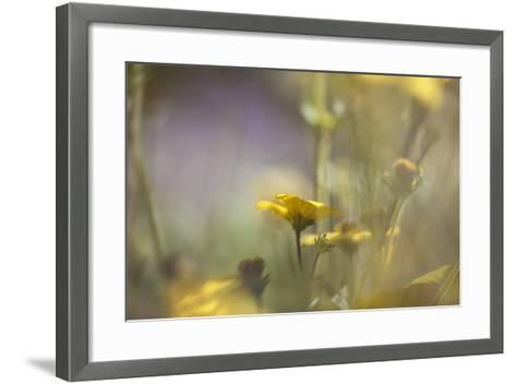 Rainbows and Buttercups-Valda Bailey-Framed Art Print