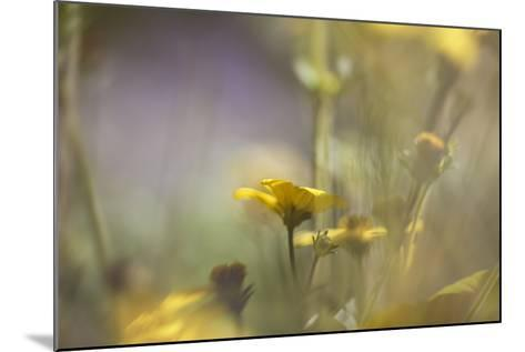 Rainbows and Buttercups-Valda Bailey-Mounted Photographic Print