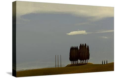 Tuscan Pines-Valda Bailey-Stretched Canvas Print