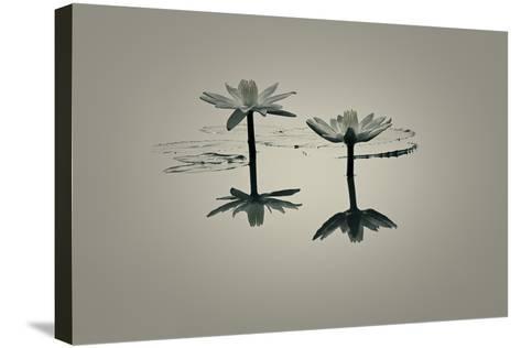 A New Dawn-Valda Bailey-Stretched Canvas Print
