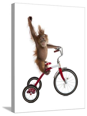 Monkeys Riding Bikes #2-J Hovenstine Studios-Stretched Canvas Print