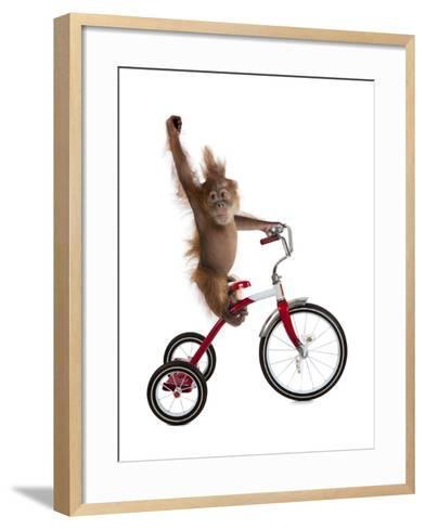 Monkeys Riding Bikes #2-J Hovenstine Studios-Framed Art Print