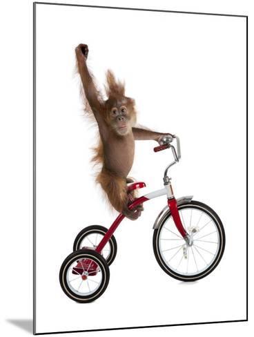 Monkeys Riding Bikes #2-J Hovenstine Studios-Mounted Giclee Print