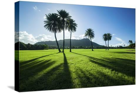 Kapiolani Park Classic Treeline-Cameron Brooks-Stretched Canvas Print