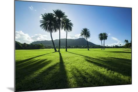 Kapiolani Park Classic Treeline-Cameron Brooks-Mounted Photographic Print