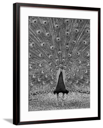The Myth of Argus-Geoffrey Ansel Agrons-Framed Art Print