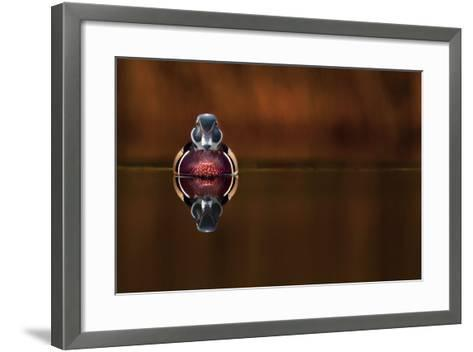 Wood Duck And His Reflex-Andre Villeneuve-Framed Art Print