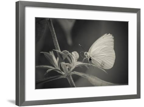 Patiently Wait-Chris Moyer-Framed Art Print