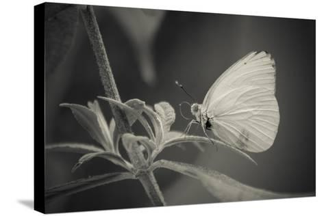 Patiently Wait-Chris Moyer-Stretched Canvas Print