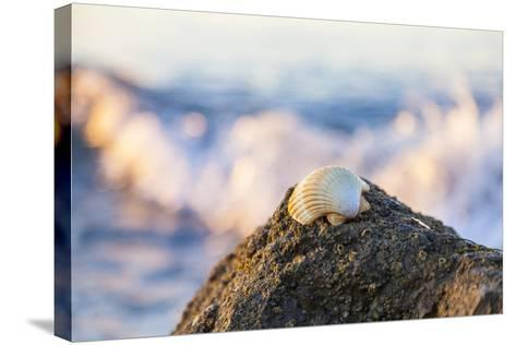 Shellview Surf-Chris Moyer-Stretched Canvas Print