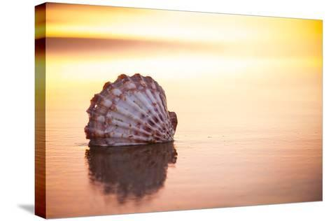 Battered But Beautiful-Chris Moyer-Stretched Canvas Print