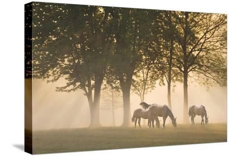 Horses in the mist-Monte Nagler-Stretched Canvas Print
