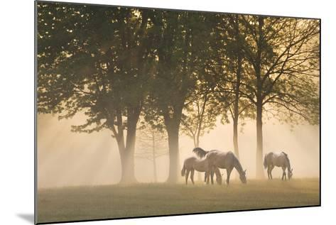 Horses in the mist-Monte Nagler-Mounted Photographic Print