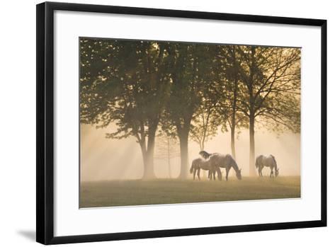 Horses in the mist-Monte Nagler-Framed Art Print
