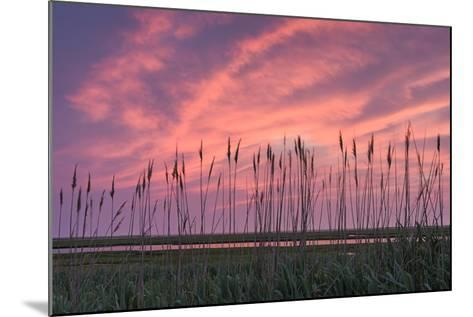 Marsh Reeds-Michael Blanchette Photography-Mounted Photographic Print