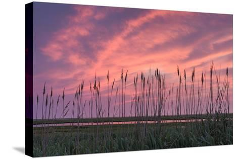 Marsh Reeds-Michael Blanchette Photography-Stretched Canvas Print