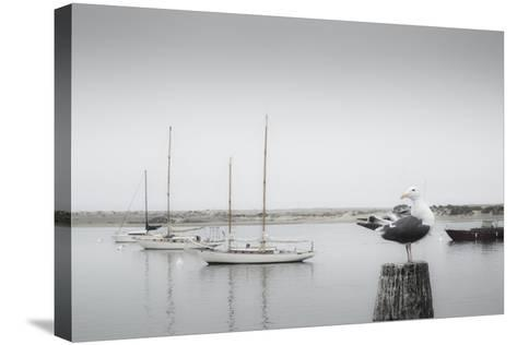 Four Boats & Seagull-Moises Levy-Stretched Canvas Print
