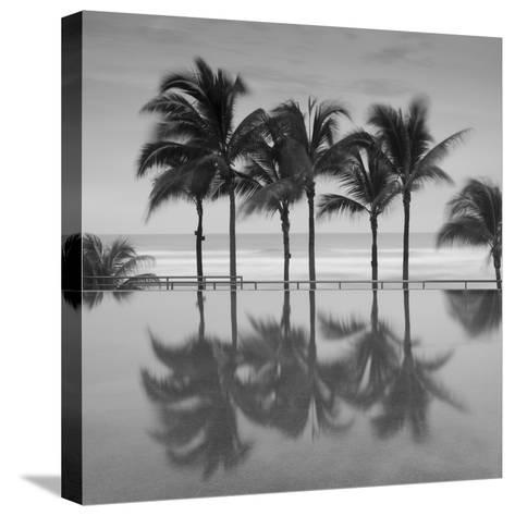 6 Palmeras-Moises Levy-Stretched Canvas Print
