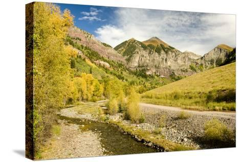 Aspen Yellows-Michael Blanchette Photography-Stretched Canvas Print