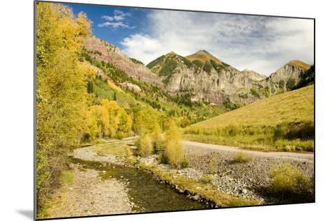 Aspen Yellows-Michael Blanchette Photography-Mounted Photographic Print