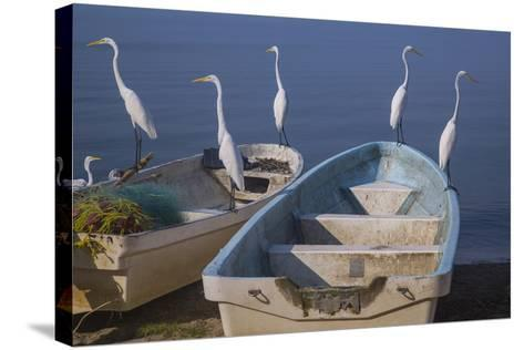 Garzas-7-2-Moises Levy-Stretched Canvas Print