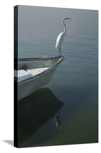 Garzas-6-2-Moises Levy-Stretched Canvas Print