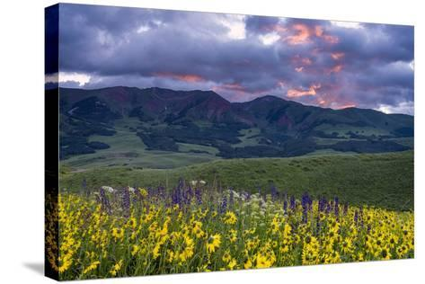 Crimson Flare-Michael Blanchette Photography-Stretched Canvas Print