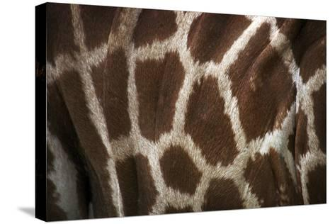 Hide II-SD Smart-Stretched Canvas Print