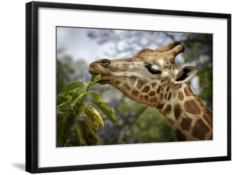 Giraffe-SD Smart-Framed Art Print