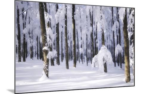 White Muslin-Philippe Sainte-Laudy-Mounted Photographic Print