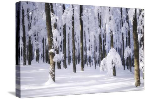 White Muslin-Philippe Sainte-Laudy-Stretched Canvas Print