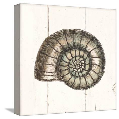 Shell Sketches I Shiplap-Wild Apple Portfolio-Stretched Canvas Print