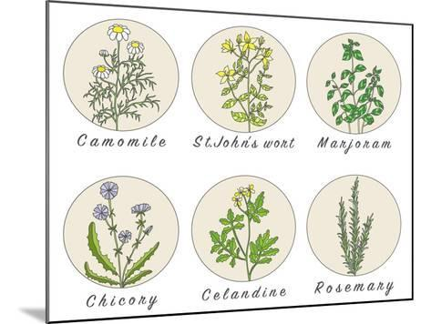 Set of Spices, Medicinal Herbs and Officinale Healing Plants Icons. Hand Drawn Illustrations. Botan- HappiestSimm-Mounted Art Print