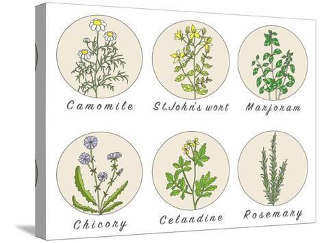 Set of Spices, Medicinal Herbs and Officinale Healing Plants Icons. Hand Drawn Illustrations. Botan- HappiestSimm-Stretched Canvas Print