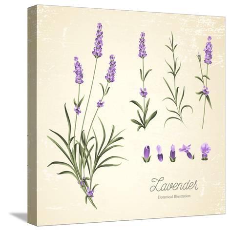 Vintage Set of Lavender Flowers Elements. Botanical Illustration. . Lavender Hand Drawn. Watercolor- Kotkoa-Stretched Canvas Print