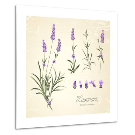 Vintage Set of Lavender Flowers Elements. Botanical Illustration. . Lavender Hand Drawn. Watercolor- Kotkoa-Metal Print
