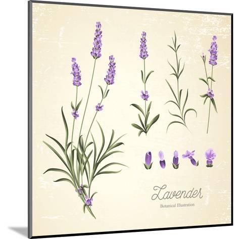 Vintage Set of Lavender Flowers Elements. Botanical Illustration. . Lavender Hand Drawn. Watercolor- Kotkoa-Mounted Art Print