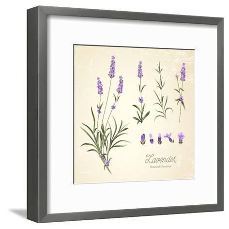 Vintage Set of Lavender Flowers Elements. Botanical Illustration. . Lavender Hand Drawn. Watercolor- Kotkoa-Framed Art Print