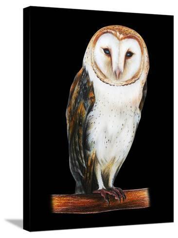 Barn Owl Drawing on Black Background- viktoriya_art-Stretched Canvas Print