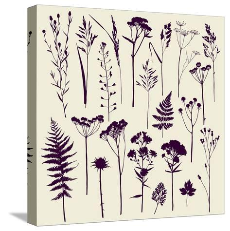 Set of Illustrations of Plants. Herbarium. Silhouettes. Sketch. Freehand Drawing.- xenia_ok-Stretched Canvas Print
