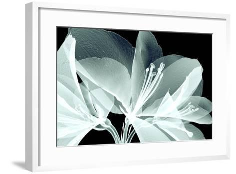 Xray Image of a Flower Isolated on Black , the Amaryllis- posteriori-Framed Art Print
