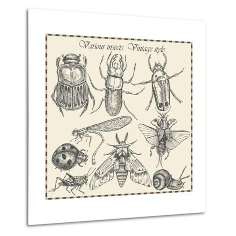 Vector Set Insects in Vintage Style- HorG-Metal Print